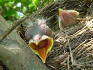 hunger vogel
